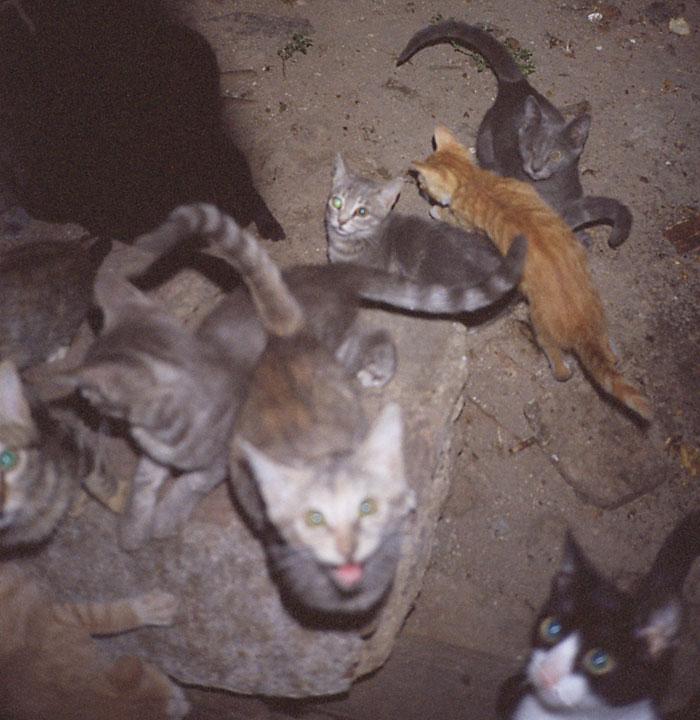 free cats toledo